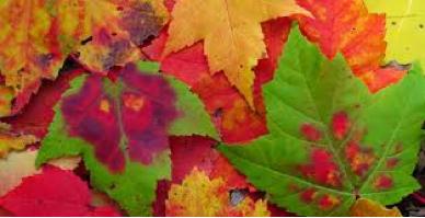autumnaltints